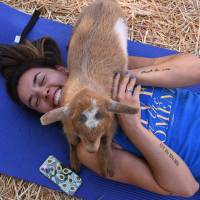 Yoga with goats? Fans line up as new fitness craze sweeps U.S.