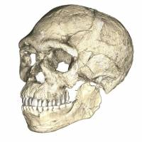 The earliest known Homo sapiens, from Jebel Irhoud in Morocco, was reconstructed from multiple fossils using micro-computed tomographic scans. | REUTERS