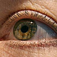 New therapy shows promise in slowing progression of macular degeneration