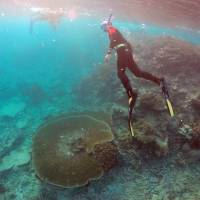 Australia must do more to protect Great Barrier Reef, UNESCO says