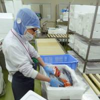A worker at the Fresh Fish Center in Haneda airport places fresh fish in a polystyrene foam box to be shipped directly to restaurants and supermarkets in Tokyo, bypassing conventional fish markets like Tsukiji.   KYODO