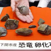 The Fukui Prefectural Dinosaur Museum says a rock found in 1965 in the city of Shimonoseki, Yamaguchi Prefecture, has been confirmed to be a dinosaur egg fossil. | KYODO