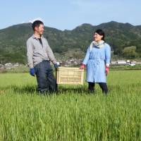 Rural Japan prefectures act as matchmakers, luring city women