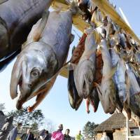 Salmon are hung from rods for preservation in Hokkaido. The catch of salmon in the waters near the northern island is projected to decrease this fall. | KYODO