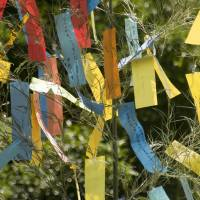Starry valentine: Paper strips with wishes written on them decorate bamboo trees, part of the custom of the summer Tanabata holiday. | ISTOCK