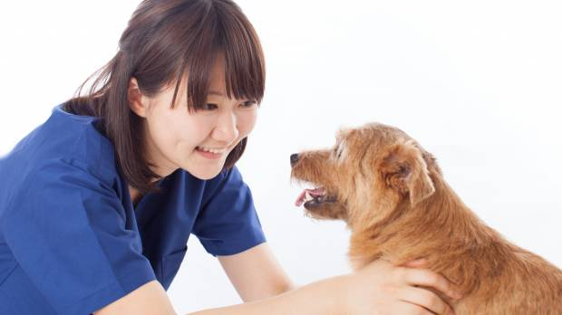 Does Japan really need more veterinarians?