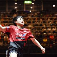 Tomokazu Harimoto prepares to hit the ball during his match against Lubomir Pistej at the World Table Tennis Championships on Saturday in Dusseldorf, Germany. | KYODO