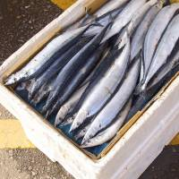 Japan's country quotas for saury catches rejected at international fisheries meeting