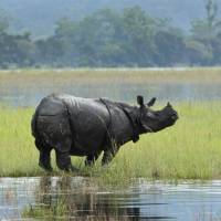 'Sixth extinction' of wildlife faster than feared, scientists warn