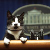Trump leaving post of first pet vacant