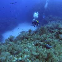 Joint sea mission with U.S. finds healthy reefs around Cuba as well as invasive lionfish
