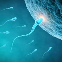 Sperm counts falling sharply in West