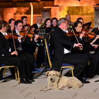 Stray dog steals the show during classical concert at Turkish international festival