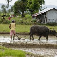 Japan NGO Carabao Family helps sustain small Philippine farms, one water buffalo at a time