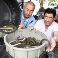 Japanese treat themselves on annual eel-eating day