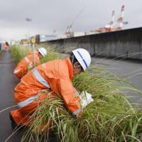 Officials from Nagoya port look for any evidence of fire ants in the village of Tobishima, Aichi Prefecture, on June 21.   KYODO