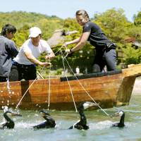 First non-Japanese cormorant fisher debuts at Kyoto tourist site