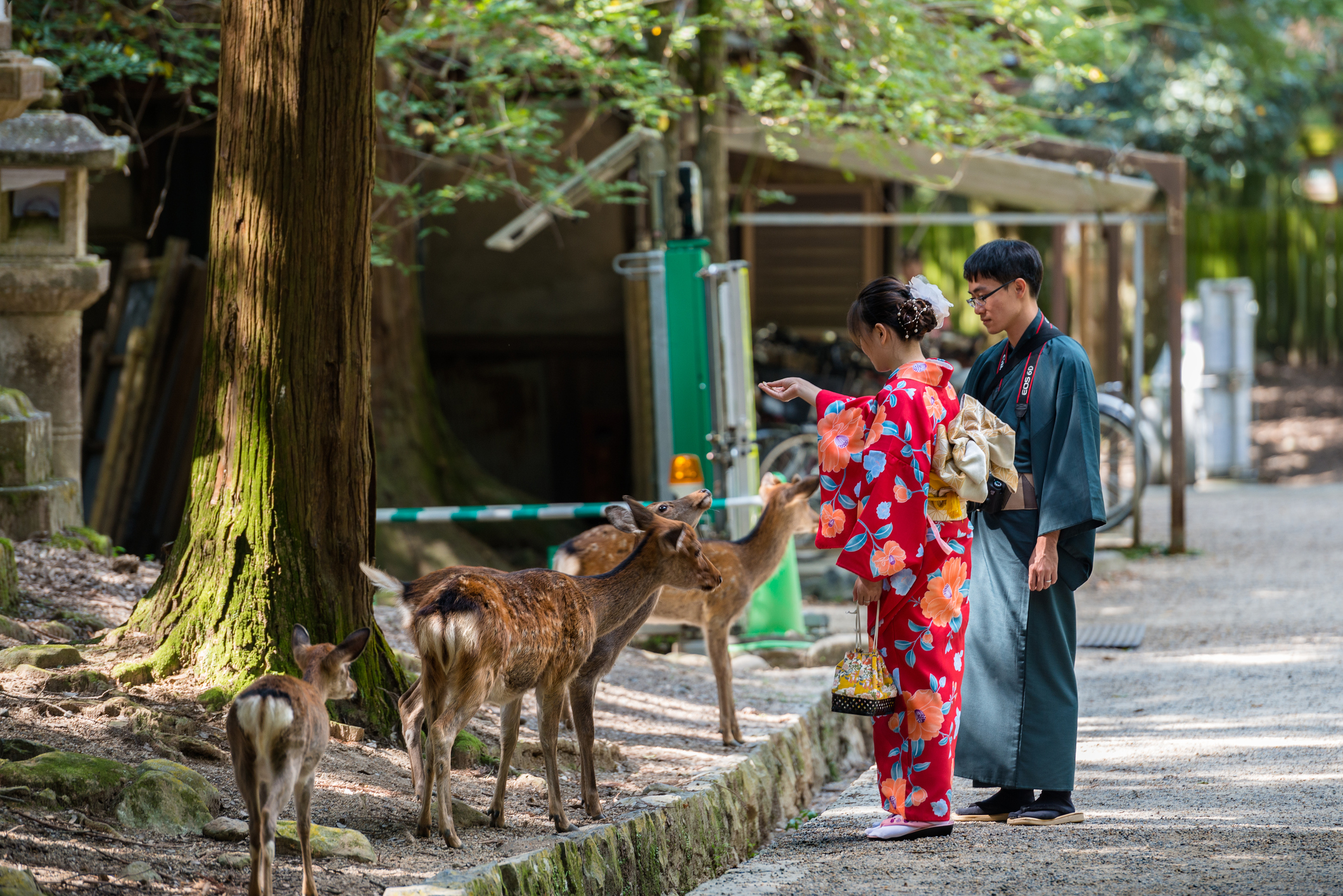 Nara is struggling with creating a transportation and hospitality infrastructure that can deal with an ever-increasing number of tourists. | ISTOCK