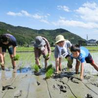 Younger Japanese urbanites increasingly being drawn to quiet rural life