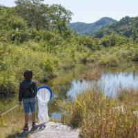 Call of the wild: A boy dreams of butterflies while gazing into the Chichibu hills.   STEPHEN MANSFIELD