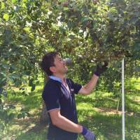 Enterprising Aomori apple farmer pivots to boutique hard cider
