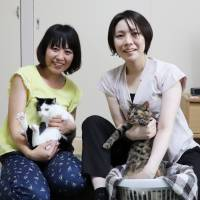 Dreams come true: Cats Dyna and Kohnan find a home in Saitama