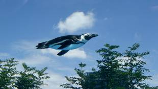 If penguins could fly . . .