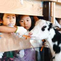Cows and goats take residence in Tokyo high-rise to promote dairy jobs