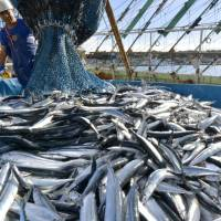 Saury prices expected to stay high as neighbors snub Japan-proposed catch quotas