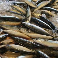 Japan's saury catches may sink to record low from August to December
