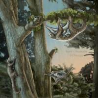How the first airborne mammals took off, 100 million years before bats
