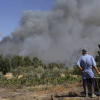 Wildfire-ravaged parts of Portugal declared state of public calamity