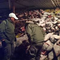 Chinese crew fined $5.9 million, sent up after Ecuador finds protected Galapagos sharks in boat's hold