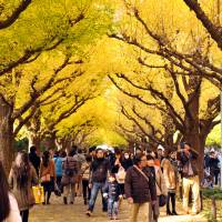 Urban trees save megacities millions through cleaner air, cooler buildings: study