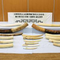 Online retailers in Japan not doing enough to stop illegal ivory trade: report