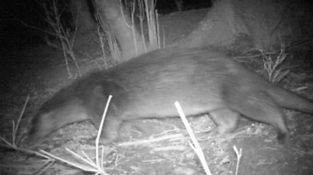 Wild otter thought to be extinct filmed alive in first Japan sighting since 1979