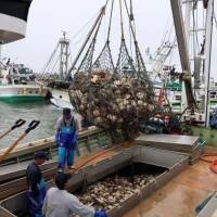 The fishermen of Sarufutsu in northern Hokkaido make good money thanks to scallops exported to Hong Kong and elsewhere, but the work is seasonal and the factory workers make minimum wage. | BLOOMBERG