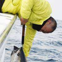 25 prefectures face catch quota cuts on smaller Pacific bluefin