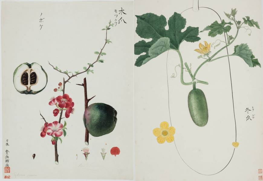 'The Botanical Illustrations of Kawahara Keiga: From the Collection of the Russian Academy of Sciences Library — Japan through the Eyes of Siebold'