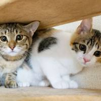Rescue in the park: Kittens named Majorelle and Kirstenbosch