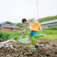 Toyota applies famed management system to agriculture