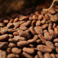 Meiji to boost premium chocolate output as sales beat target