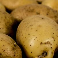 Healthy, ripe potatoes are seen in this file photo. Japan on Tuesday lifted an 11-year import ban on potatoes grown in Idaho, as the risk of crop pest infestations is believed to have now diminished. | ISTOCK