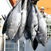 International panel agrees on new flexible bluefin tuna catch limit amid overfishing concerns