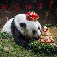 World's oldest panda, Basi, dies at age 37 in China