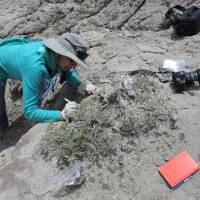CU Boulder associate professor Karen Chin excavates dinosaur coprolites at Grand Staircase-Escalante National Monument in Utah in 2013. A new study shows herbivorous dinosaurs also were eating crustaceans, likely seasonally. | COURTESY UNIVERSITY OF COLORADO / HANDOUT / VIA REUTERS
