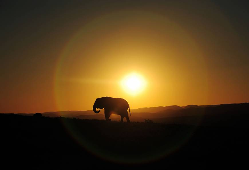 Elephants hide by day, forage at night to evade poachers