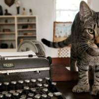 Key West's Hemingway museum, 54 descendants of writer's six-toed cat ride out Irma unscathed