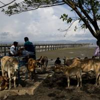 Cattle traders wait for customers on Shah Porir Dwip, an island in the Bay of Bengal in southern Bangladesh, on Sept. 21. | AP