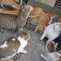 Japan to compile guidelines to address animal hoarding
